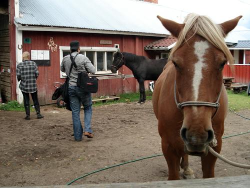 Horses - not built to look smart.