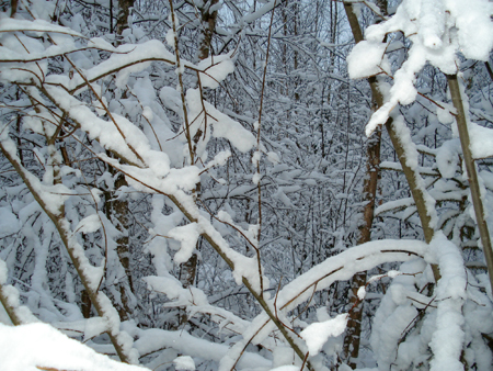 There are a couple of bad thickets on the way to the geocache. Much more pretty and fun in the wintertime, though.