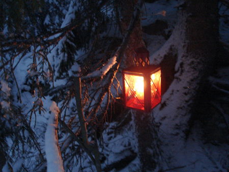 Some of the lanterns were hanging on fir trees.